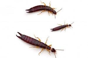 pest spray - get rid of creepy crawlies