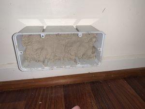 termite control termite bait before