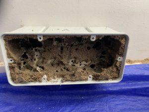 termite bait eaten